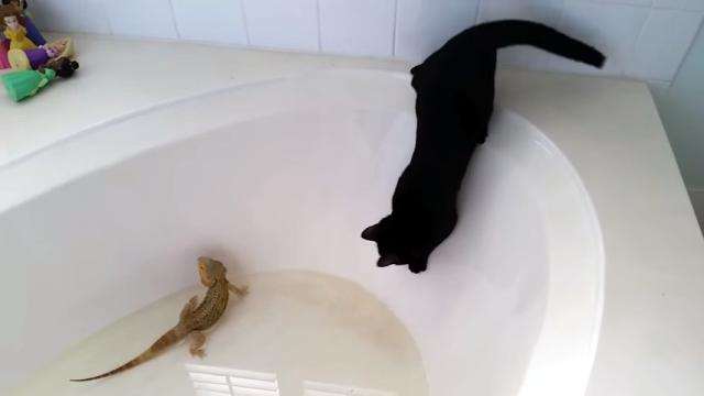トカゲに気をとられてバスタブの罠にハマってしまった黒猫。