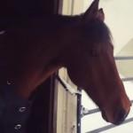 吹雪の中、あまりの寒さに外に出たことを後悔する馬