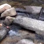 川にボールを流すと一人遊びができる事を発見した犬