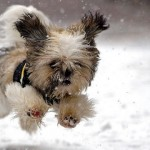 初めて経験する雪に対する反応がおもしろ可愛い動物たちの写真 35枚
