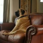 何か訳ありなのか、憂いを帯びた眼差しで遠くを見つめる犬、と思いきや・・・