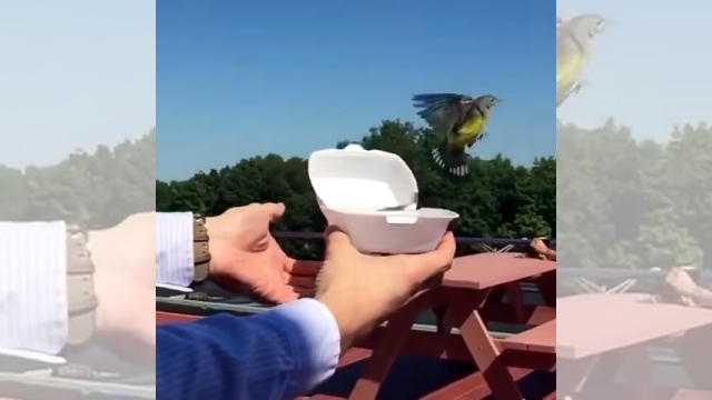 小鳥を自然に帰そうと解き放ったものの、目を覆いたくなる悲しい結果に