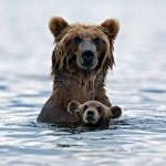 愛らしい動物親子のポートレート写真 30枚