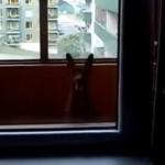 「何処に居るの?」と飼い主 → 「ここに居るワン!」と一生懸命居場所をアピールするワンコ