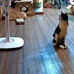 飼い主をお出迎えする下半身が不自由な猫が愛おしすぎる!