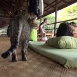 身体も心も癒やしてくれる、タイ・チェンマイの究極のマッサージ師