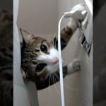 コンセントのプラグを巡る飼い主と子猫の攻防戦