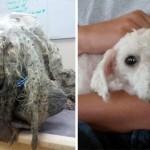 ボロボロの状態で保護された捨て犬のビフォー・アフター写真 16枚