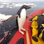 南極観測隊員の乗ったボートに「ハロー!」と挨拶にやって来たペンギン