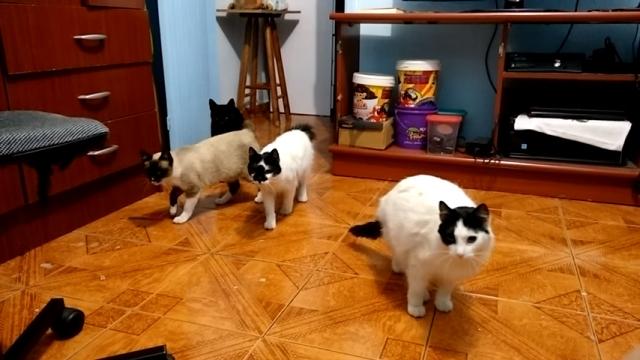 まるでコマ送りで再生した映像のような動きをする猫がおもしろい!
