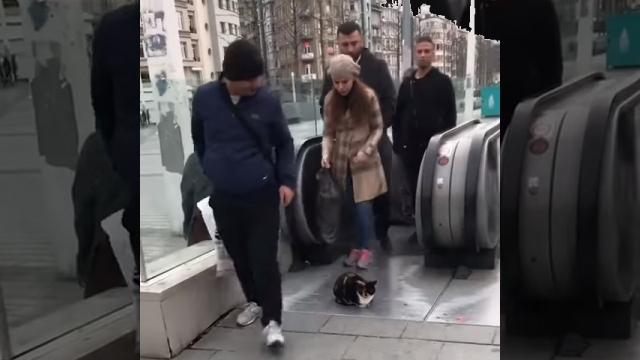 猫好きの多いトルコ、イスタンブールからホッコリとする話題
