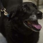 10年前に行方不明になった子犬と奇跡的な再会を果たした家族