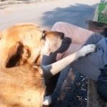 撫でるのを止めると「もっと撫でて」と催促する甘えん坊の犬