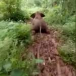 楽しそうに丘を滑り下りて行く赤ちゃんゾウが可愛い!