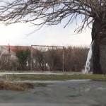 木の幹から大量の水が湧き出る不思議な光景