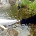 川で泳ごうとする飼い主を必死に止める健気な愛犬