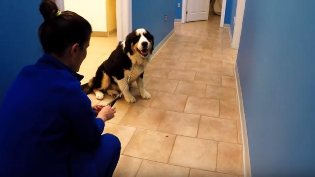 診察が終わっても帰ろうとしない、獣医さんのことが大好きなワンちゃん