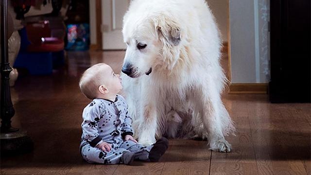 「子供が生まれたら犬を飼いなさい」をひしひしと感じる子供と犬の写真集 30枚
