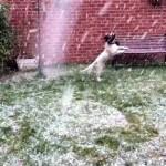 雪やこんこ♪ → 犬は喜び庭かけまわる