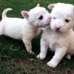 キスをする愛らしい動物たちの微笑ましい光景 36枚