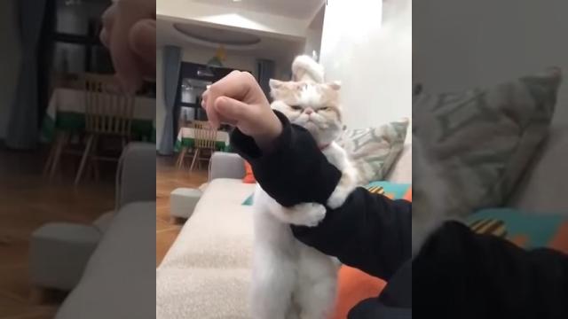 飼い主の腕をガッチリつかまえて離さない猫