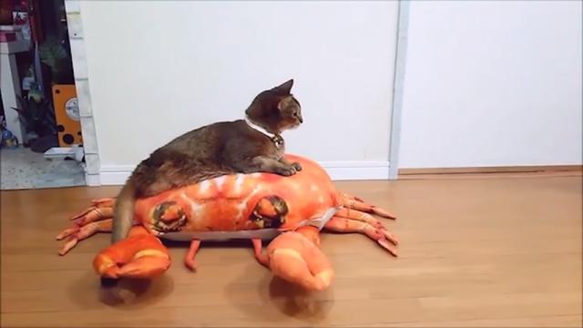 後ろ足がなく、歩くのが不自由な猫の移動手段が斬新すぎる!