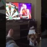 テレビでダーツゲームを観戦中のワンコの反応がおもしろい!