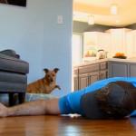 飼い主が死んだ振りをして愛犬の反応を確かめた結果、やっぱり猫とは違う!