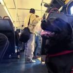 毎日ひとりでバスに乗ってドッグパークへ出掛ける賢い犬