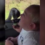 エサを激しくついばむダチョウを見てツボにハマった赤ちゃん→大爆笑!