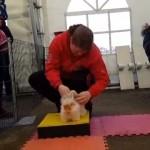 ラビットショーの障害物競技に挑戦するゴーイングマイウェイなウサギがおもしろい!