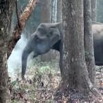ゾウが喫煙!?・・・インドで撮影された野生のゾウの謎めいた行動