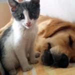 眠っている同居犬を手荒い方法で起こそうとする子猫がおもしろ可愛い!