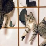 なんてこった!?|猫の愚行に翻弄される飼い主たち → 敗北感が漂う写真いろいろ 10枚