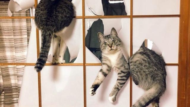 なんてこった!? 猫の愚行に翻弄される飼い主たち → 敗北感が漂う写真いろいろ 10枚