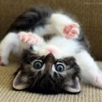 可愛さ満ち溢れる動物の赤ちゃんの写真集 32枚