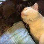 猫の熱烈なラブコールに無関心を装う犬・・・内心はまんざらでも無さそうだけど