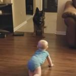 追いかけっこをする赤ちゃんと犬の微笑ましい光景に心がほっこり♪