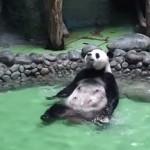 大きなお風呂を独り占めしてご満悦なパンダ・・・人間っぽくておもしろい!