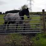 オーナーを無視していたら、置き去りされそうになり慌てる馬がおもしろい!