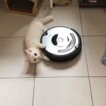 乗るのはもう飽きた・・・ルンバの新たな楽しみ方を見出した猫