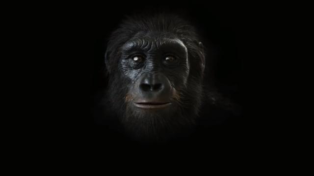 600万年前から現在まで、人間の顔の進化を2分間にまとめた興味深い映像
