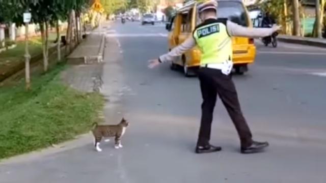 道路を渡る猫を誘導する優しいお巡りさんのほのぼのとする光景