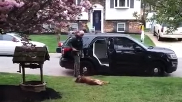 ある日の男性警察官と警察犬の出勤時の様子を捉えたほのぼのとする光景。