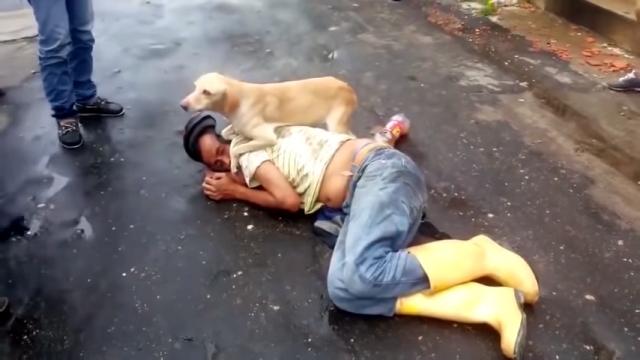 路上に倒れた飼い主を守ろうと、何人たりとも寄せ付けない忠犬が愛らしい!