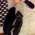自分たちとは違う猫のニオイを漂わせる飼い主に不信感を抱く猫たち