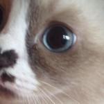 猫の鼻に焦点を当てて撮影した猫好きには堪らない写真 30枚