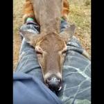お姉さんの膝を枕にしてお昼寝を始めた人懐っこい野生のシカ