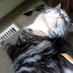 孫の手で背中を掻いてやると、心地良さそうに喉を鳴らす猫
