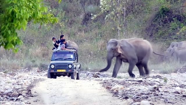 観光客の乗ったジープに突進してくる1頭のゾウ・・・あわや激突か!?